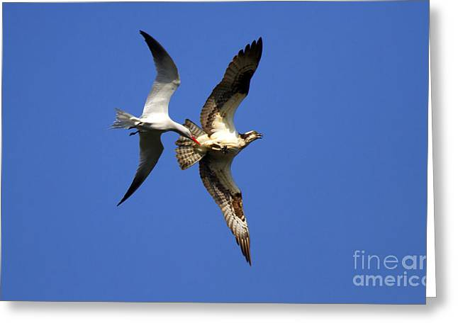 Mid-air Attack Greeting Card by Mike  Dawson
