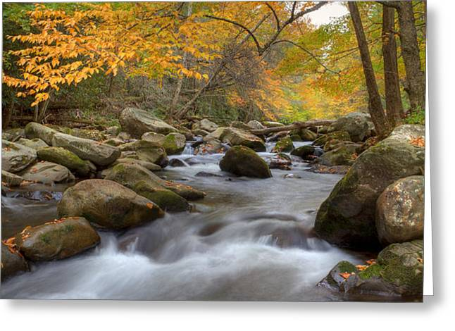 Mid Stream II Greeting Card by Charles Warren