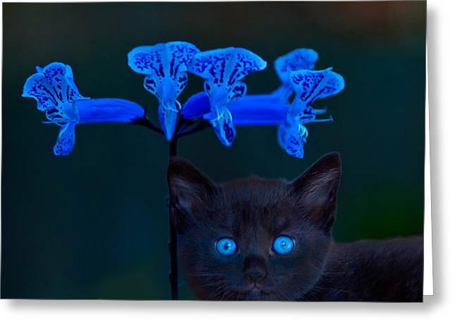 Ole Blue Eyes Greeting Cards - Midnight Blue Greeting Card by Randall Branham