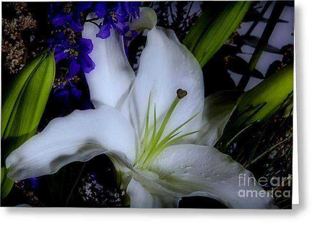 Flowers Stretched Prints Greeting Cards - Midnight Lily Greeting Card by M K  Miller