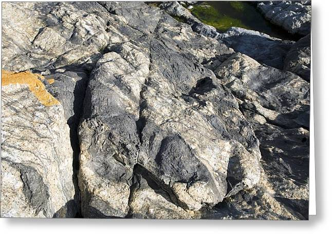 Cape Town Greeting Cards - Migmatite Outcrop Greeting Card by Sheila Terry