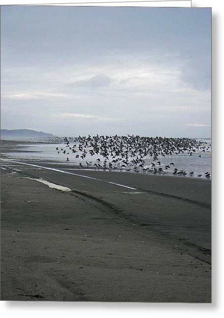 Sand Patterns Greeting Cards - Migration of Sandpipers Greeting Card by Pamela Patch