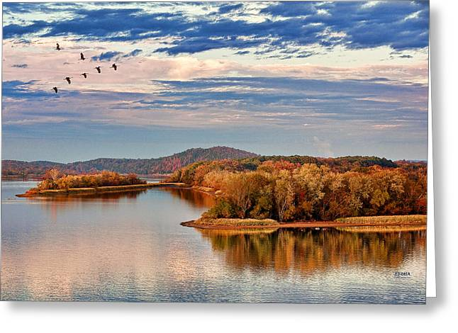 Tennessee River Greeting Cards - Migration Stop Over Greeting Card by Steven Llorca