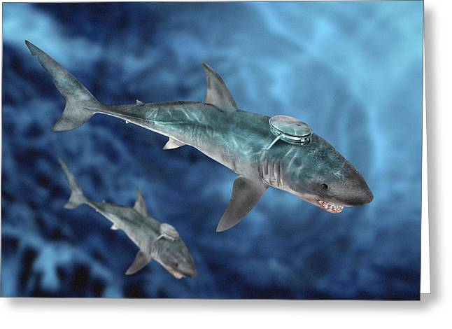 Tracker Greeting Cards - Military Sharks Greeting Card by Victor Habbick Visions