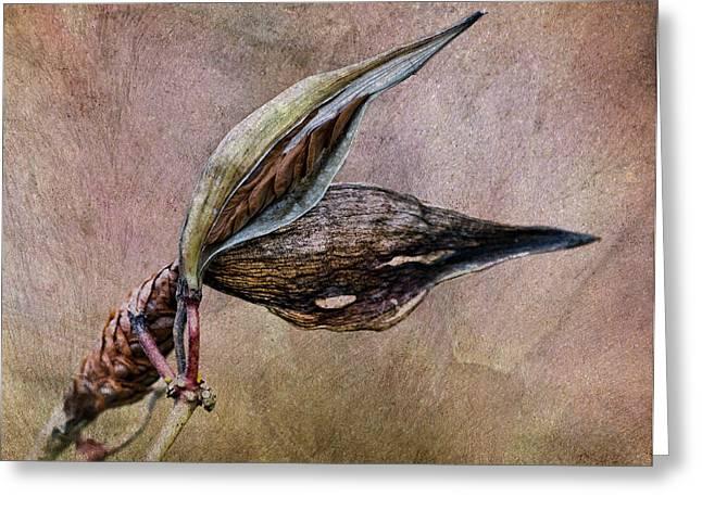 Seedpods Greeting Cards - Milkweed Seed Pod Greeting Card by Dale Kincaid