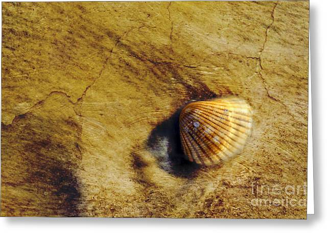 Shell Texture Greeting Cards - Millennia - D006841-a Greeting Card by Daniel Dempster
