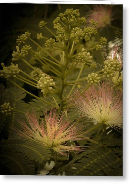 Mimosa Flowers Greeting Cards - Mimosas In The Morning Greeting Card by Trish Tritz