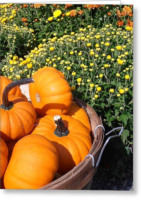 Mini Pumpkins Greeting Cards - Mini Pumpkins Greeting Card by Kimberly Perry