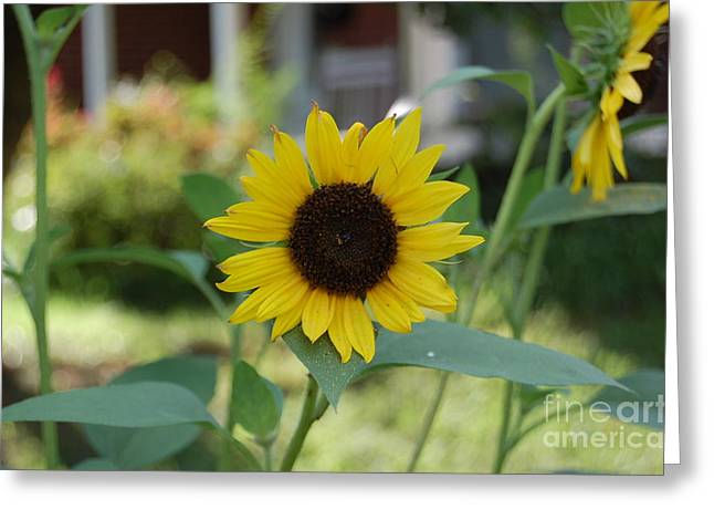 Mini Sunflower Greeting Card by Nick
