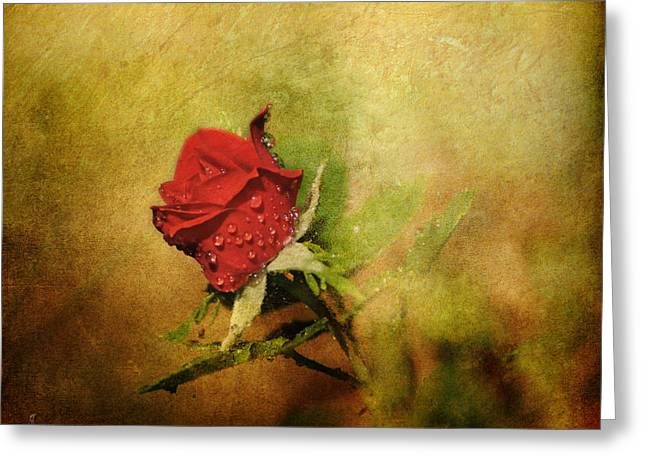In Full Bloom Greeting Cards - Miniature Red Rose II Greeting Card by Jai Johnson