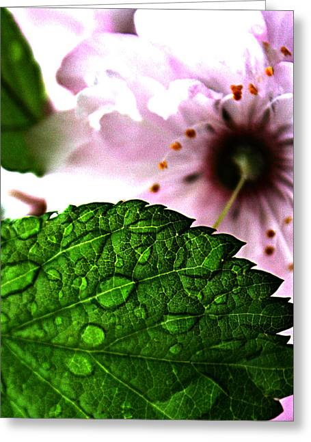 Farm Framed Prints Greeting Cards - Mirror In The Seed Greeting Card by Jerry Cordeiro