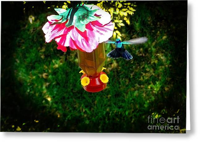 Hovering Greeting Cards - Mirror Mirror On The Wall Greeting Card by Al Bourassa
