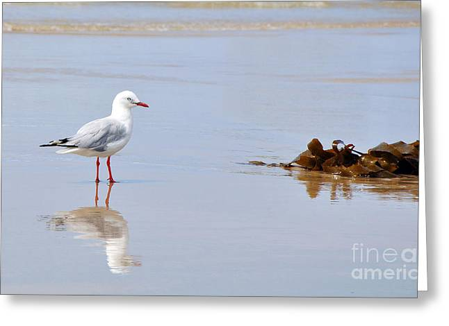 Seagull On Beach Greeting Cards - Mirrored Seagull Greeting Card by Kaye Menner
