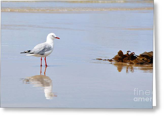 Sea Birds Greeting Cards - Mirrored Seagull Greeting Card by Kaye Menner