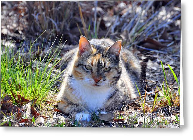 Al Powell Photography Usa Greeting Cards - Miss Kitty Greeting Card by Al Powell Photography USA