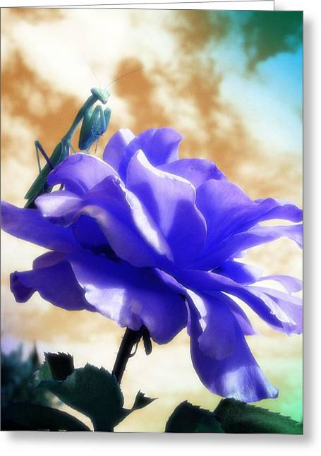 Cindy Nunn Greeting Cards - Miss Mantis Greeting Card by Cindy Nunn