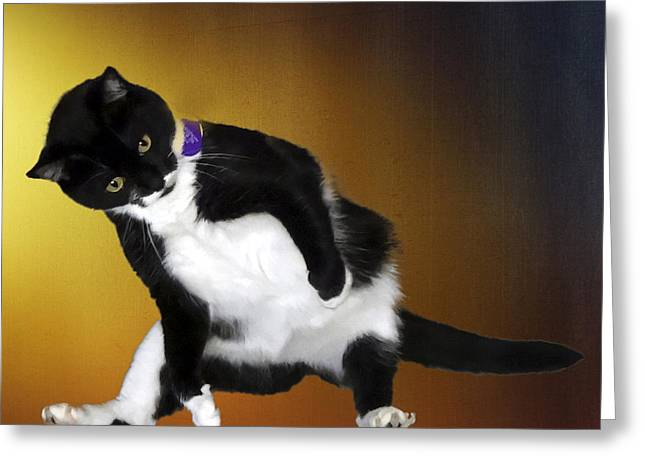 Tuxedo Digital Art Greeting Cards - Missy at play Greeting Card by Barney Martin