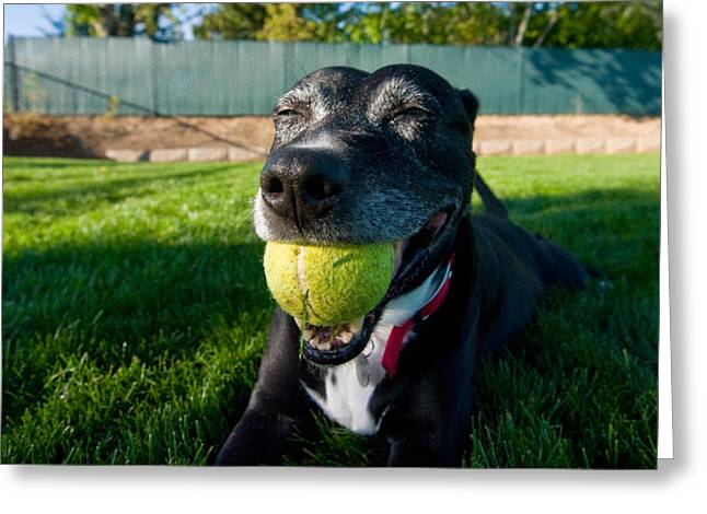 Dog With Tennis Ball Greeting Cards - Missy in Her Element Greeting Card by Kevin Felts