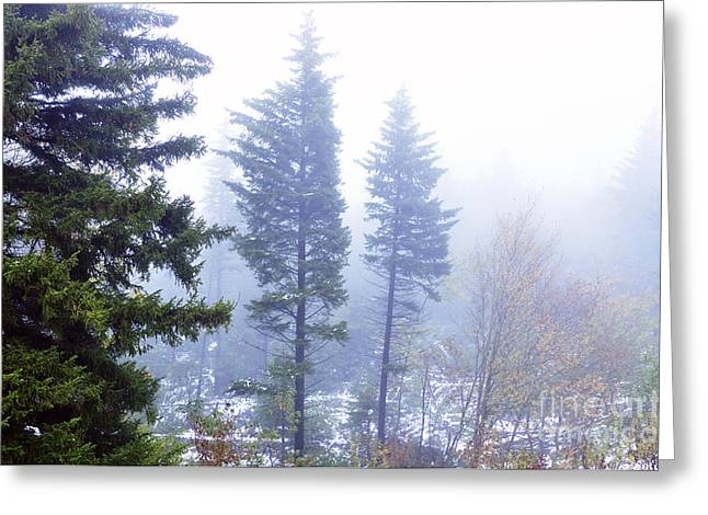 West Virginia Snow Scene Greeting Cards - Mist along the Highland Scenic Highway Greeting Card by Thomas R Fletcher