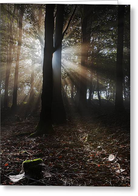 Kris Dutson Greeting Cards - Mist and Webs Greeting Card by Kris Dutson