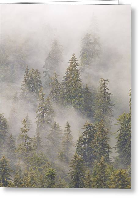 Juneau Park Greeting Cards - Mist In Tongass National Forest Greeting Card by Matthias Breiter