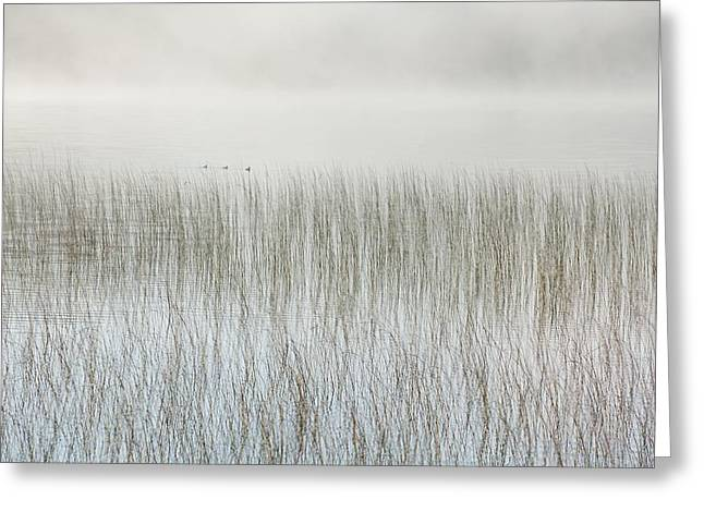 Foggy Day Greeting Cards - Mist On A Lake With Reeds Ontario Greeting Card by Susan Dykstra