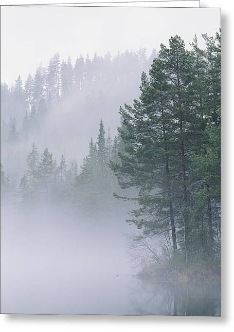 Forests And Forestry Greeting Cards - Mist Rises From An Evergreen Forest Greeting Card by Mattias Klum