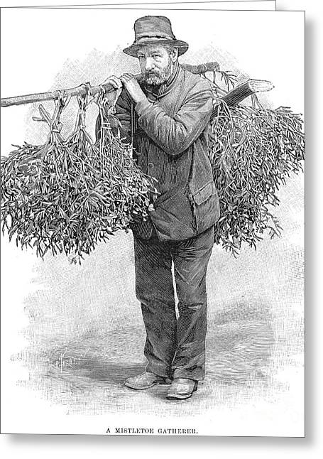 Gatherers Greeting Cards - Mistletoe Gatherer, 1894 Greeting Card by Granger