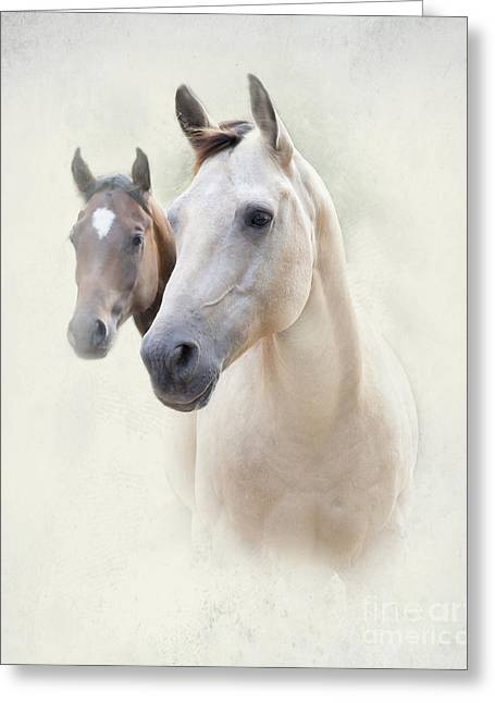 Quarter Horses Greeting Cards - Misty Greeting Card by Betty LaRue