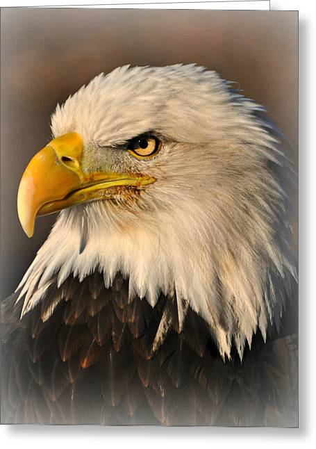 Marty Koch Greeting Cards - Misty Eagle Greeting Card by Marty Koch