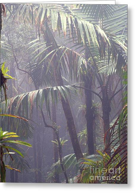 Puerto Rico Greeting Cards - Misty El Yunque Rainforest Greeting Card by Thomas R Fletcher