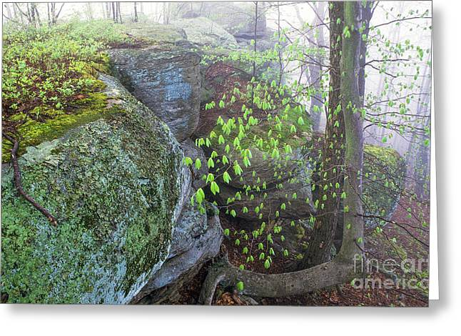 Allegheny Mountains Greeting Cards - Misty Green Spring Morning Greeting Card by Thomas R Fletcher