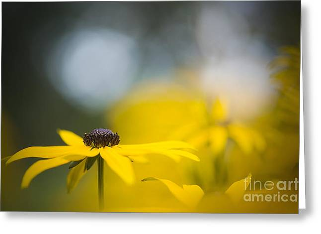 Close Focus Floral Greeting Cards - Misty Morn Greeting Card by Jacky Parker
