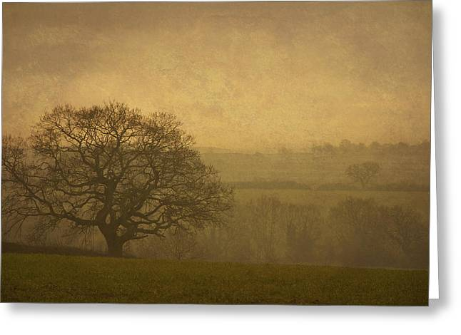 Bambers Greeting Cards - Misty Morning Greeting Card by Clare Bambers
