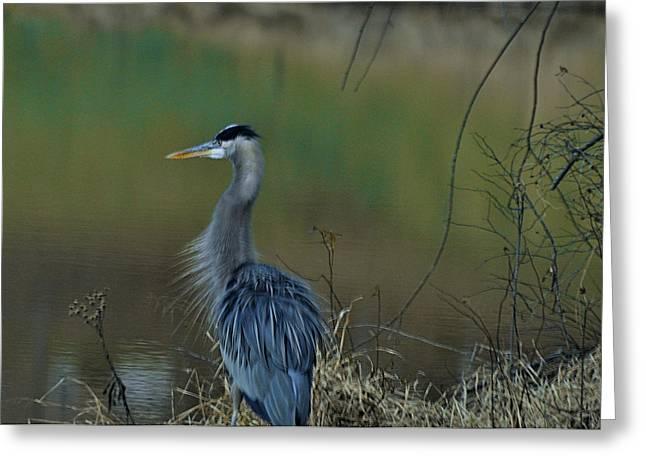 Misty Morning Heron - 0993c95950c Greeting Card by Paul Lyndon Phillips