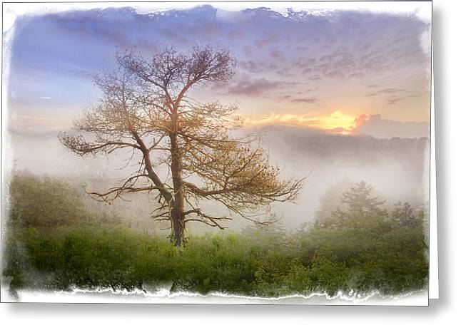 Tennessee Farm Greeting Cards - Misty Mountain Greeting Card by Debra and Dave Vanderlaan