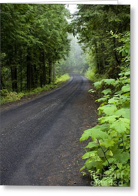 Destiny Greeting Cards - Misty Mountain Road Greeting Card by Idaho Scenic Images Linda Lantzy
