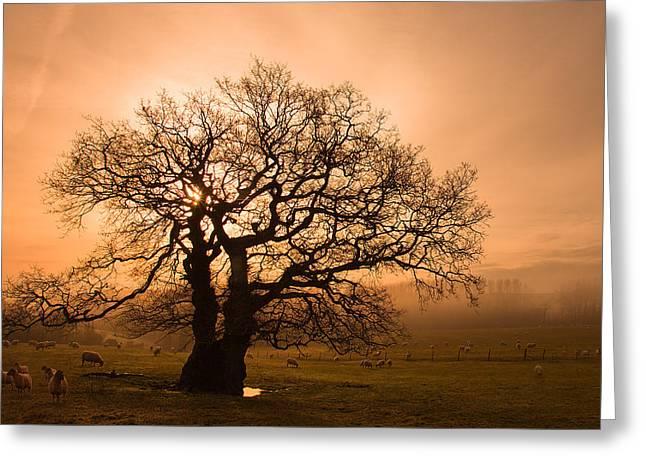 Misty Oak Greeting Card by Kris Dutson