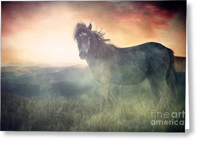 Misty Sunset Greeting Card by Lee-Anne Rafferty-Evans