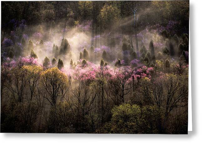 Misty View Of A Forested Hillside Greeting Card by Sam Abell
