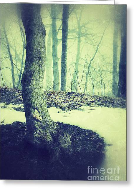 Winter Scenes Rural Scenes Greeting Cards - Misty Winter Woods Greeting Card by Jill Battaglia