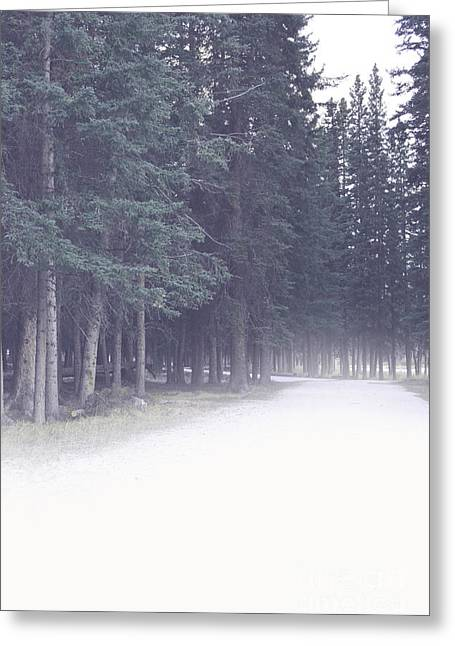 Framed Winter Snow Photograph Greeting Cards - Misty Woods Greeting Card by Andrea Hazel Ihlefeld