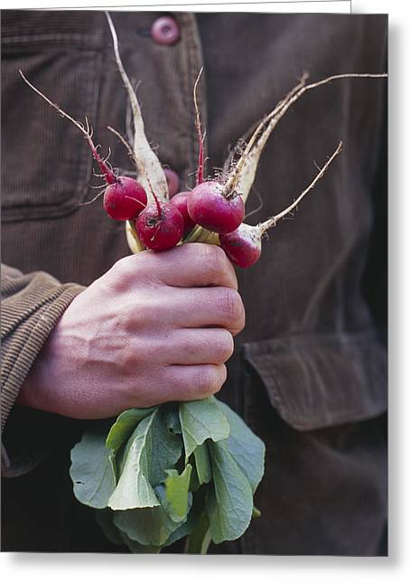 Mixed Organic Radishes Greeting Card by Maxine Adcock