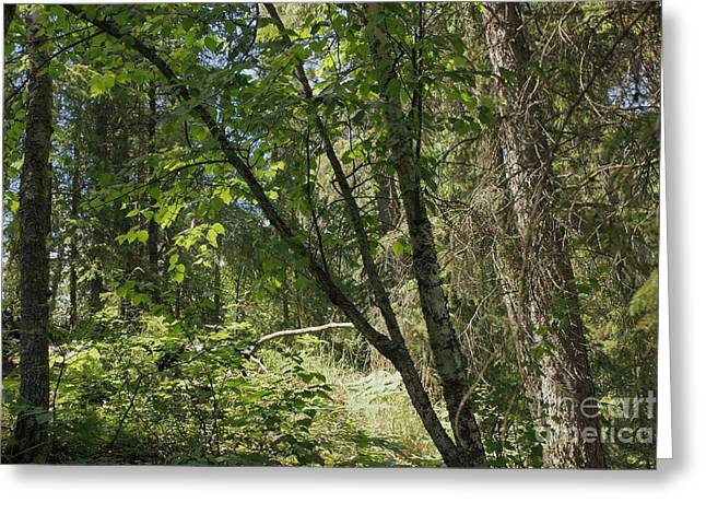 Landscapes Greeting Cards - Mixed Woods Greeting Card by Jim Sauchyn