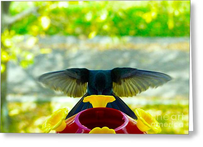 Hovering Greeting Cards - Mmmmm Good Nectar Greeting Card by Al Bourassa