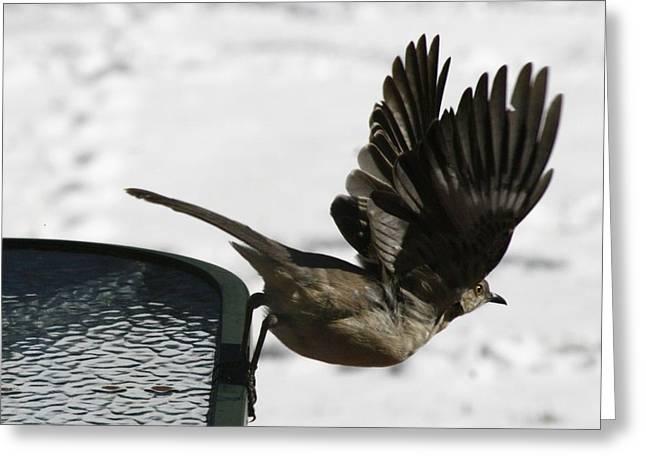 Mockingbird Greeting Cards - Mockingbird Departure Greeting Card by Christopher Kirby