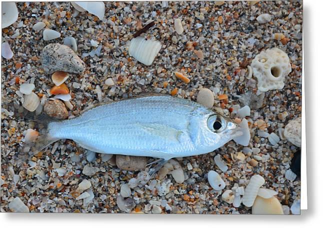 Stiltsville Greeting Cards - Mojarra on Sea Shells Greeting Card by Ken  Collette