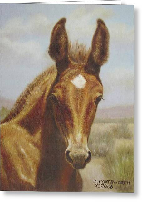 Dorothy Coatsworth Greeting Cards - Molly Mule Foal Greeting Card by Dorothy Coatsworth