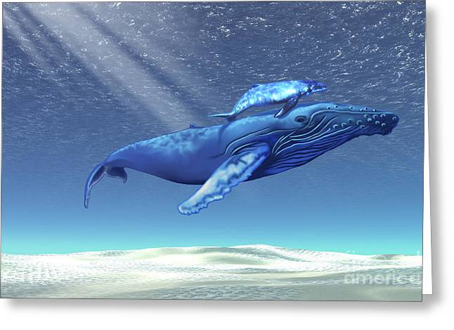 Caring Mother Digital Greeting Cards - Mom And Baby Humpback Whales Swim Greeting Card by Corey Ford