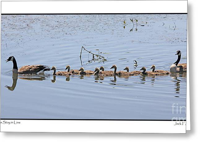 Geese Family Greeting Cards - Mom Says Stay in Line  Greeting Card by Jack Schultz